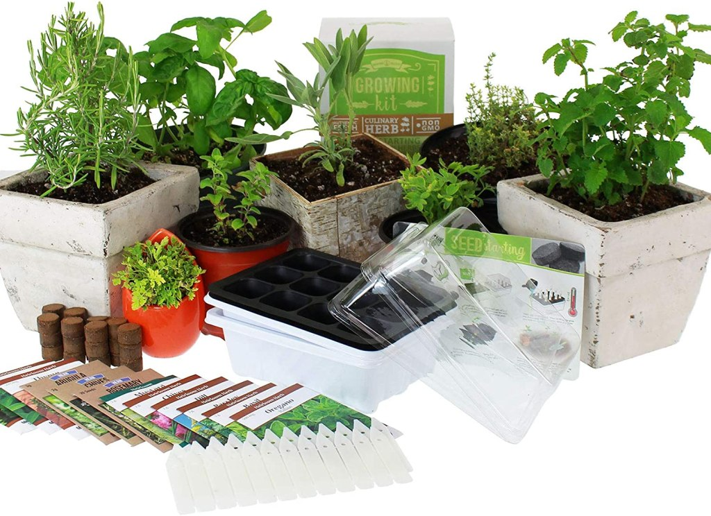 The Best Indoor Vegetable Kits On Amazon Sheknows