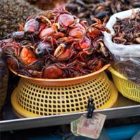 Crab in Cambodia