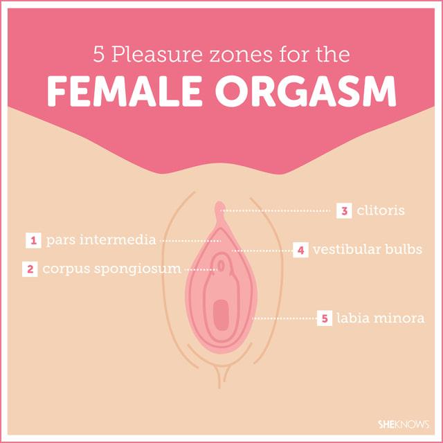 Pleasure points of a woman