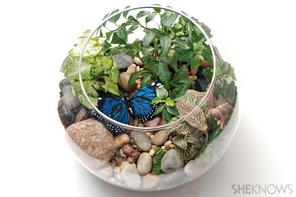 Indoor terrarium craft