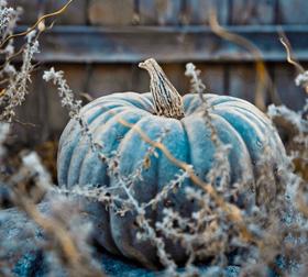 Blue pumpkin pic