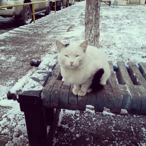 I am the wise snow cat