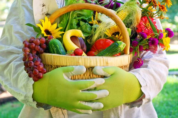 Farmer with Vegetable
