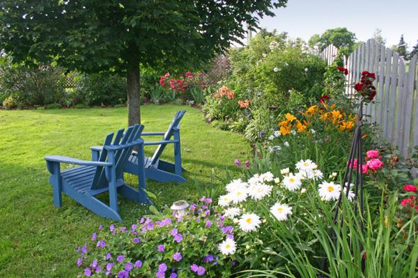 Backyard with daylillies