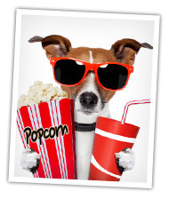 Dog with popcorn