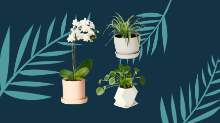 Non-toxic indoor plants safe for pet