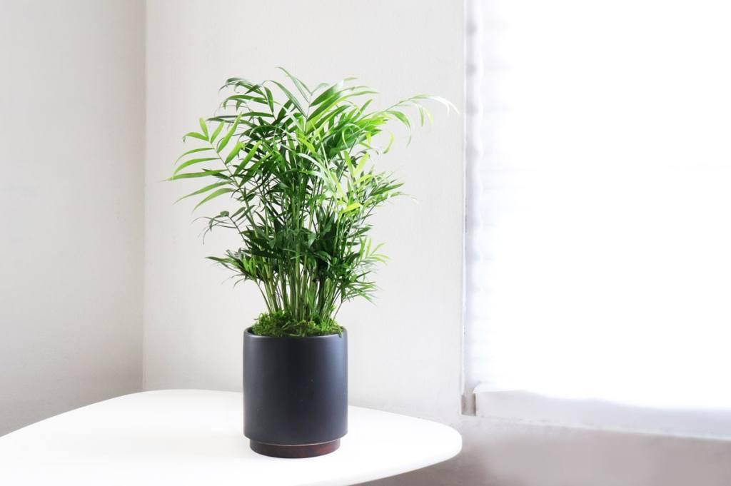 Leon George kid and pet safe indoor plants