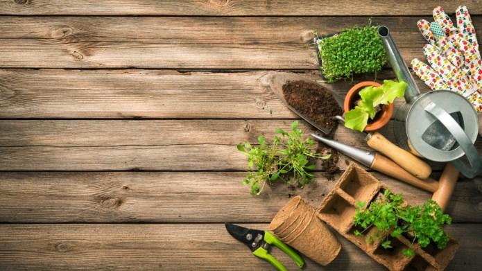 Best Gardening Kits on Amazon