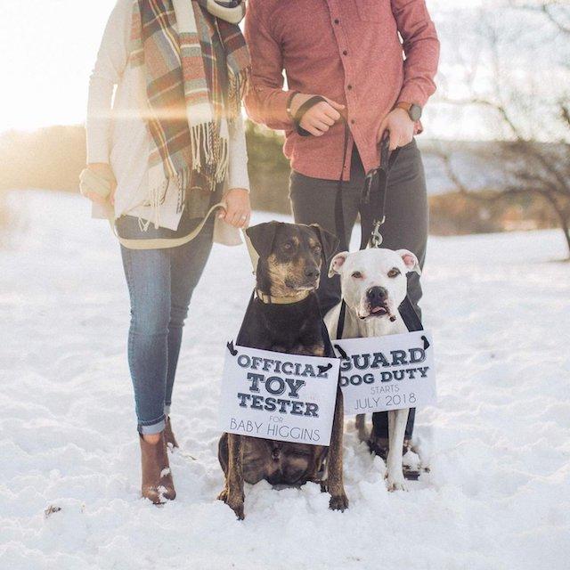 2 dấu hiệu chó cho thông báo mang thai