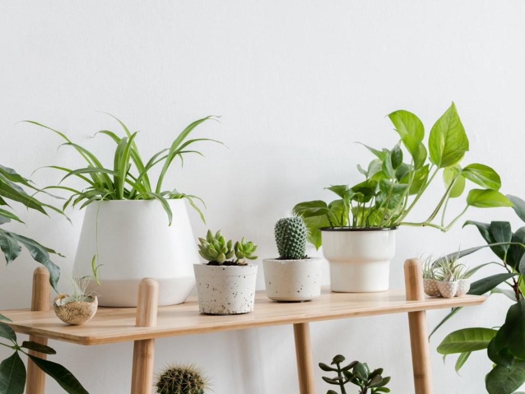 Durable Flower Pots for Indoor & Outdoor Plants
