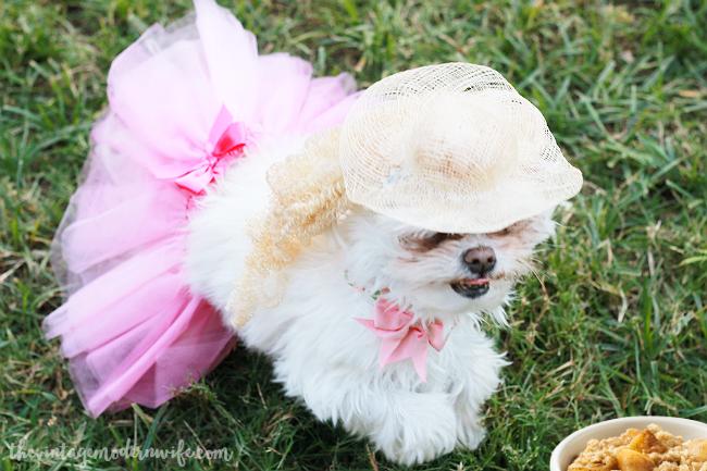 Goldilocks dog costume