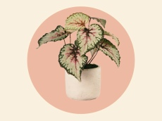Nordstrom's Selling a Bunch of Gorgeous Faux Plants That Totally Look Real