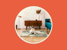 The Best Pet-Friendly Vrbos That'll Make Vacation Planning a Breeze